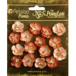 Penny Lane - Forget Me Nots - Antique Peach